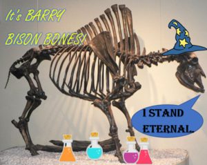 Barry Bison Bones